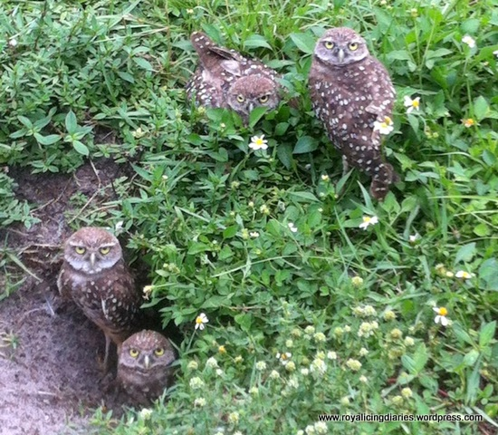 Baby owls in their nest